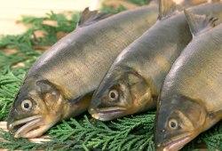 Рыба в питании детей.