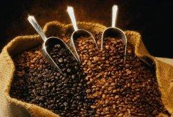 Как правильно выбрать, сварить и пить кофе