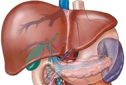 Заболевания печени и желчевыводящих путей. Симптомы