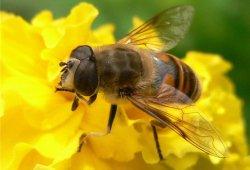 Апитерапия. Лечение пчелиным медом