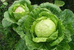 Капустно-овощная диета.