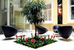 Растения на рабочем месте