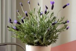 Травы-специи, которые можно вырастить в своём доме.