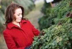 Как правильно выбрать новогоднюю елку?