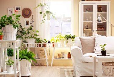 Создайте зелёный уголок у себя дома