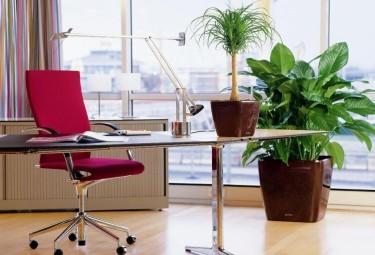 Растения для офиса: польза, требования, выбор